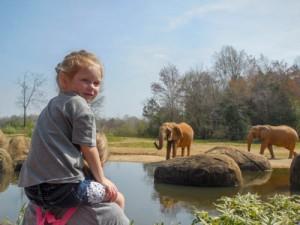 Emma.elephant
